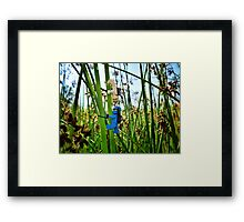 Training in the grass (3 of 3) Framed Print