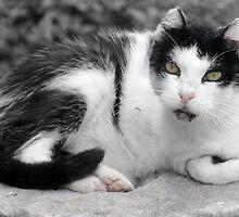 Hail, Caesar Cat of Torre Argentina by simpsonvisuals