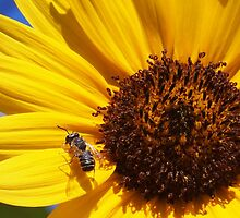 Bee-utiful Sunflower Feast by Linda  Makiej