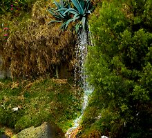 Gushing Agave by Al Bourassa