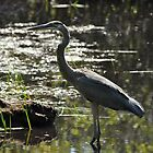 Great Blue Heron by RoyceRocks