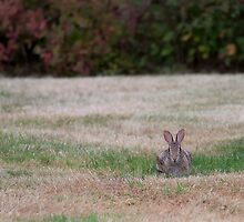 My Gardener Stopped By to Mow the Lawn Today........ by TeresaB
