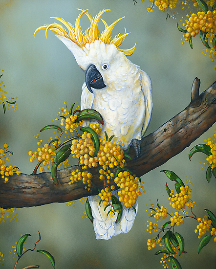 Australian White Cockatoo  by owen  pointon