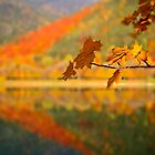 Autumn Leaves by Delfino
