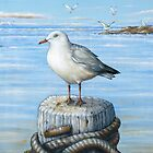 Sea Gull by owen  pointon