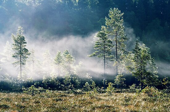 5.9.2013: September Morning III by Petri Volanen