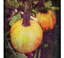 Vintage Look Pumpkin or Winter Squash Photo by pastpresent
