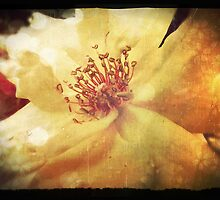 Antique Look Yellow Flower in Summer Sun by pastpresent