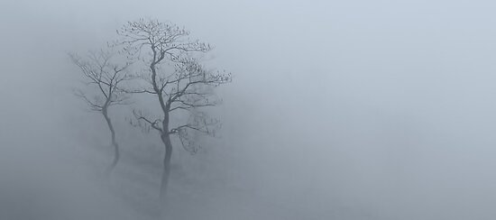 Tree in the mist by Alan Robert Cooke