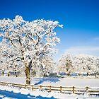 Winter Wonderland by Heidi Stewart