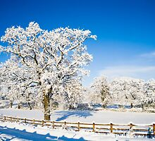 Winter Wonderland by Heidi Stewart