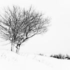 Winter Tree's in Snow by Heidi Stewart