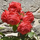 The rose and the wall/Soft and hard by Karo / Caroline Evans (Caux-Evans)