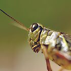 Grasshopper by lumiwa