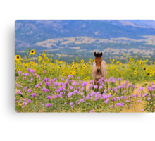 Foal and Flowers Canvas Print