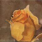 Honey Perfume Floribunda Rose  with Texture by Robert Armendariz