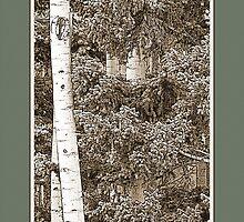 Aspens (Sepia, Green) by Hannelore Dean