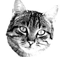 Tabby Cat Digital Engraving. Images of Cats by digitaleclectic
