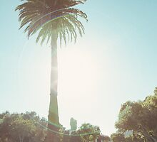Palm Tree in Park by visualspectrum