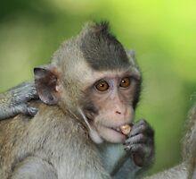 Monkey Time by byronbackyard