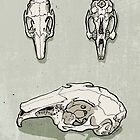 rabbit skull by Richard Morden