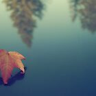 Fall Reflections by Jenn Ramirez