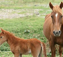 Mare and Colt in a Meadow by rhamm