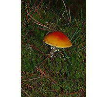 Little Orange Toadstool Photographic Print