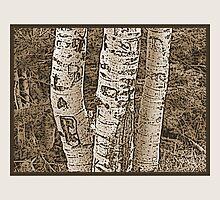 Aspen Trunks (Sepia) by Hannelore Dean