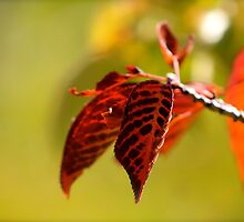 Change is inevitable by Sue Morgan