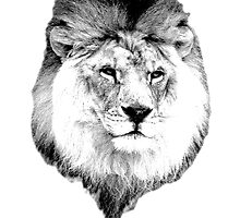 Majestic Lion. Wildlife Digital Engraving Image by digitaleclectic