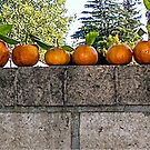 WALL OF TANGERINES 2 by Rebecca Dru