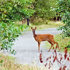 Roe Deer by M.S. Photography & Art