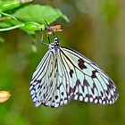 Paper Kite Butterfly by M.S. Photography & Art