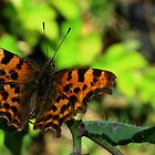 Butterfly at rest by liberthine01