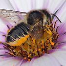 pollen bath by gruntpig
