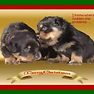 Vector Rottweiler Puppy Christmas Wishes  by taiche