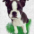 Sad Boston puppy by Cazzie Cathcart