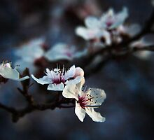 'Cherry Blossoms' from series 'Lighting the Way' by RevolutionImage