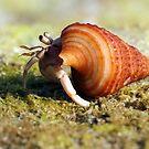 """Marine creatures in Andaman # 1"" by debjyotinayak"