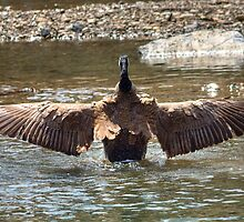 Wing Span by JamesA1