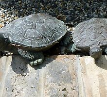 Turtle Twins by WildestArt