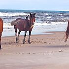 """Trio Of Beach Buddies"" Wild Horses, Assateague Island by Sandy O'Toole"