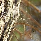 a spiderweb by dreamax1985