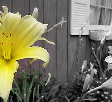 Yellow Lily in a Black and White World by jemvistaprint