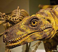 Raptor! by Thad Zajdowicz