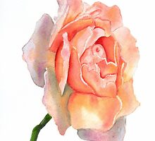 Multicolor Rose Watercolor by AngelaBishop