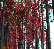 Red Grove by Danielle LaBerge