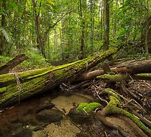 'Mossman Gorge, Daintree National Park, North QLD' by Kerrod Sulter