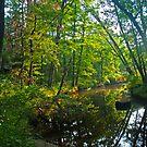 Summer Morning Green by Lisa G. Putman
